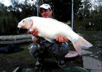 Pesca alla carpa la tecnica carpfishing le esche e l for Carpa koi costo