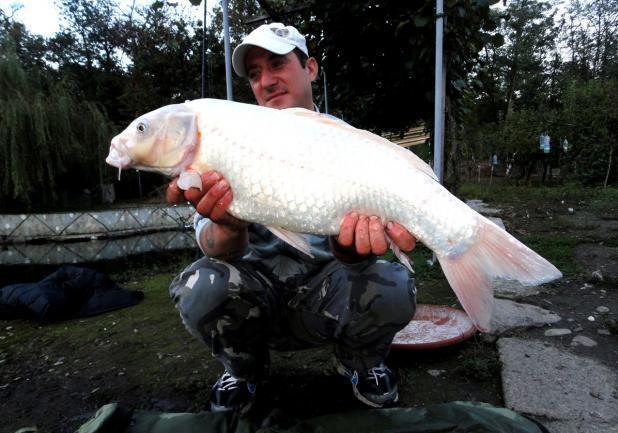 Foto pesca alla carpa koi foto profilo for Carpa koi costo
